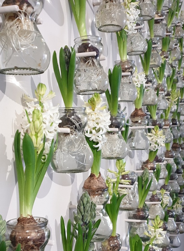 NB Flowers – Step and repeat with hyacinth at Open Art Fair